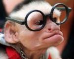 singe a lunettes.jpg